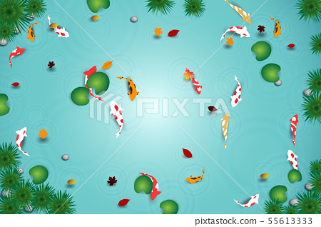 clean water lake with koi fishes 55613333