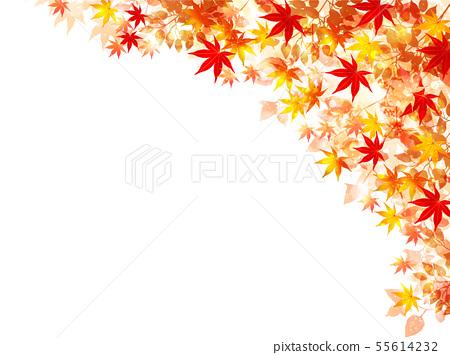 秋葉楓葉背景 55614232