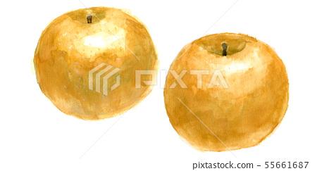 2 Japanese pears 55661687