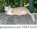 cat on the fence white face 55671016