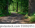 Bicycle lanes on the asphalt road in the nature 55692051