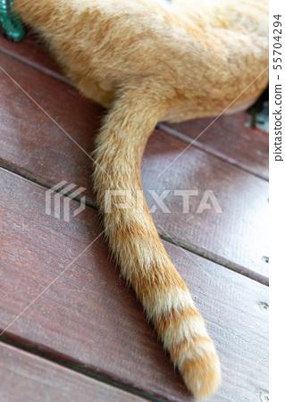 悠閒的貓 Leisurely Cat のんびりとしている猫 55704294
