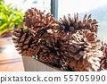球果 Conifer cone 毬果 花 球花 植物 庭院 裸子植物 55705990