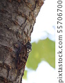 매미가있는 숲 55706700