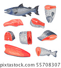 Set of sliced pieces of salmon. Vector illustration on a white background. 55708307