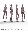 หญิงวัสดุการผ่ากล้ามเนื้อ 3DCG ภาพประกอบวัสดุ 55752795