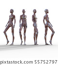 หญิงวัสดุการผ่ากล้ามเนื้อ 3DCG ภาพประกอบวัสดุ 55752797