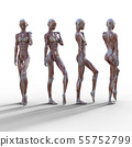 여성 해부 근육 3DCG 일러스트 소재 55752799