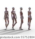 여성 해부 근육 3DCG 일러스트 소재 55752804