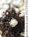 Amami Oshima's okayadkari genus 55770705
