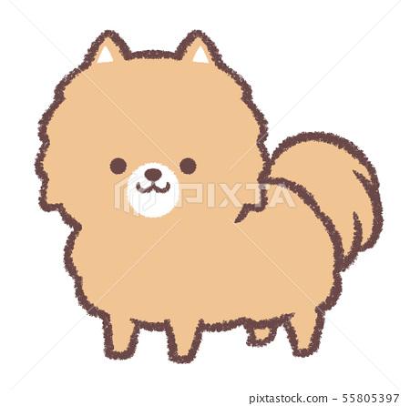 Pomeranian standing 55805397