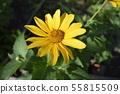 Bright sunny flower, yellow, macro, 55815509