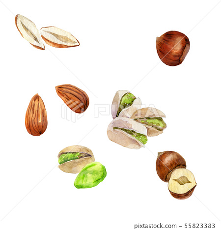 Collection of nuts 55823383