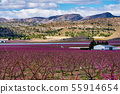 Orchards in bloom. A blossoming of fruit trees in Cieza, Murcia Spain 55914654