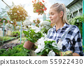 Young woman gardening in greenhouse.She selecting 55922430