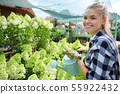 Young woman gardening in greenhouse.She selecting 55922432
