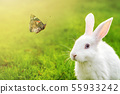 Cute adorable white fluffy rabbit sitting on green grass lawn and looking on beautiful flying 55933242