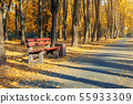 Beautiful scenic alley with benches between trees and golden colored foliage lush at city park 55933309