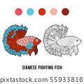 Coloring book, Siamese fighting fish 55933816