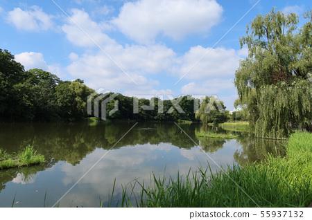 여름 샤 쿠지이 공원 보트 연못 55937132