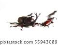 딱정벌레와 톱 사슴 벌레 흰색 배경 곤충 벌레 생물 여름 방학 55943089