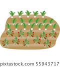 萝卜番茄 55943717