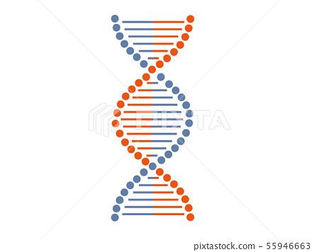 基因 DNA 螺旋 55946663