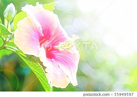 hibiscus 55949597