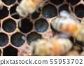 蜜蜂,蜂蜜,養蜂人 55953702