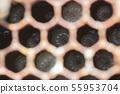 蜜蜂,蜂蜜,養蜂人 55953704