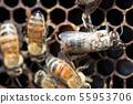 蜜蜂,蜂蜜,養蜂人 55953706