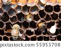 꿀벌, 꿀, 양봉 사람 55953708