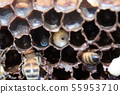 꿀벌, 꿀, 양봉 사람 55953710