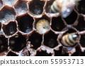 꿀벌, 꿀, 양봉 사람 55953713