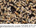 꿀벌, 꿀, 양봉 사람 55953717
