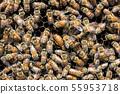 꿀벌, 꿀, 양봉 사람 55953718