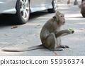 feeding a monkeys 55956374