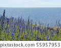 Bright blossom Blueweed flowers by a coast with 55957953