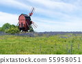 Blossom blueweed flowers by an old wooden windmill 55958051