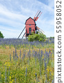 Summer flowers by an old wooden windmill 55958052