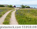 Beautiful gravel road to the coast in summer 55958108