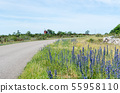 Blossom blueweed by roadside 55958110