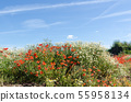 Beautiful summer flowers, poppies and chamomile 55958134