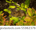 Little Mouse Sits On Plant And Eats A Seed 55962376