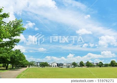 清新的藍天公園風景 55976271