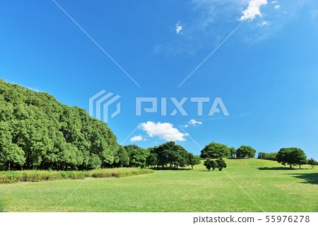 清新的藍天公園風景 55976278