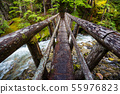 Bridge in the forest 55976823