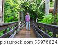 Boardwalk in the forest 55976824