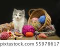 Portrait of cute grey pretty kitten. Funny kitten 55978617