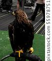 Black hawk furry. 55978751